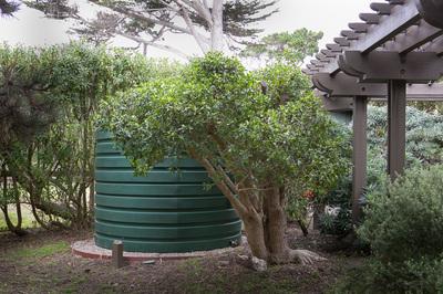 Rainwater Garden Solutions Landscaping